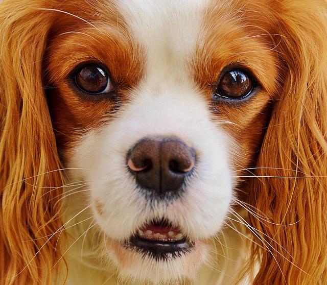 kutyakozmetika aszód