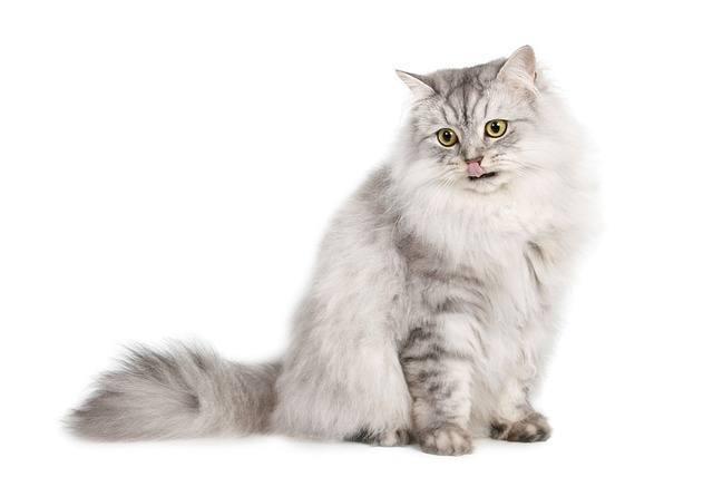 Turul Állatorvosi Rendelő Aszód Cica