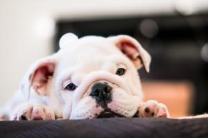 swimmer puppy szindróma